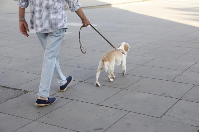 歩くだけでも立派な運動
