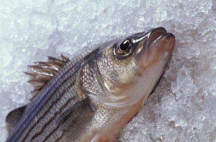 健康のためにタンパク源である魚を食べよう
